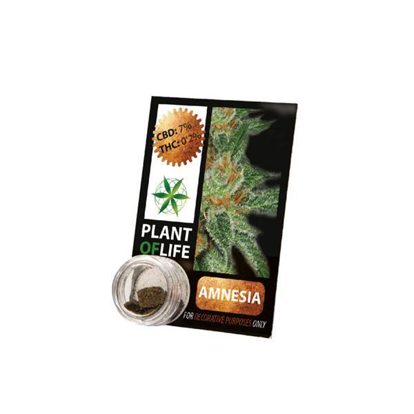 Plant of Life 7% Amnesia