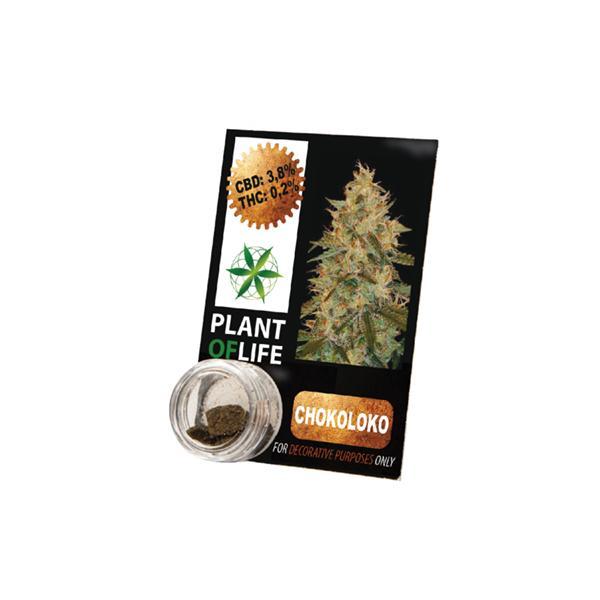 Plant of Life 3.8% Chokoloko